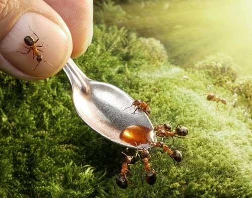 Как избавиться от муравьёв в домашних условиях