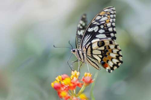 Приснился сон с бабочкой