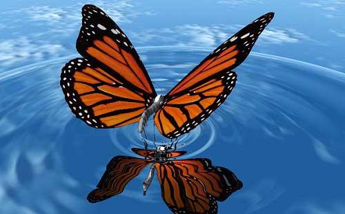 увидеть сонник бабочку