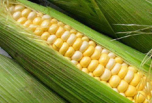 Препарат из початков кукурузы