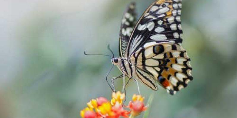 Что значит видеть во сне много разноцветных бабочек?