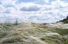 Что значит видеть во сне сильный ветер? Все толкования!