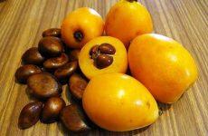 Мушмула: польза и вред фрукта