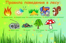Как нужно вести себя в лесу детям и школьникам: памятка