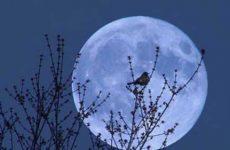 Почему нельзя смотреть долго на луну
