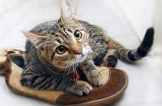 Как  устранить запах кошачьей мочи