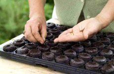 Как пользоваться торфяными таблетками для рассады?