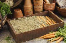 Как хранить морковь в погребе или в подполе деревянного дома зимой?