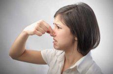 Как избавиться от запаха сырости в квартире и частном доме?