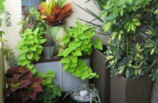Теневыносливые комнатные растения названия и фото