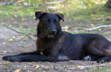 Приснилась что кусает большая чёрная собака